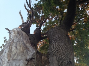 Like the Goddess, the Hel-Tree is cleaved to show Life and Death.