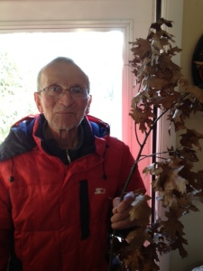 My father proudly carrying the 2014 badnjak he harvested last Christmas Eve in Lake County, Illinois.