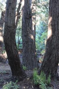 Hekate Tree