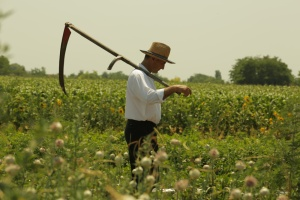 The typical Serbian farmer, the stock my father hails from, lives very much in a pre-Industrial age.