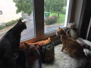 Hela (left) and Thor spy on the birds feeding below.
