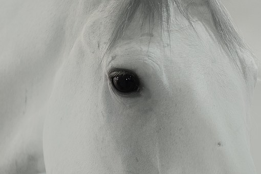 horse-843524__340