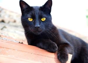 cat-1841561_960_720