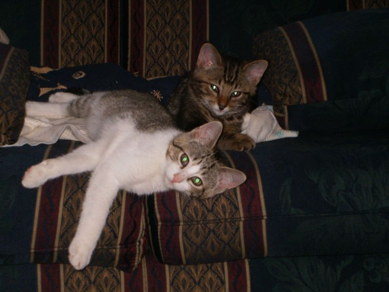 Beowulf and Grendel as kittens